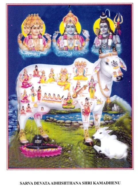 Go Samrakshane.JPG